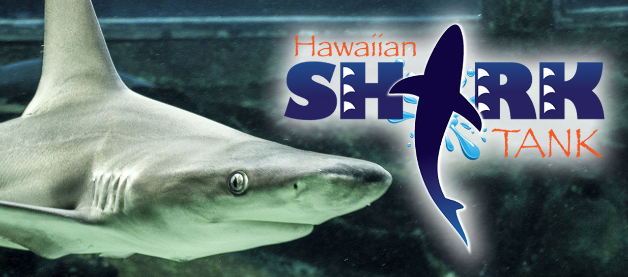 Sea Life Park transforms reef tank to shark exhibit and interactive program