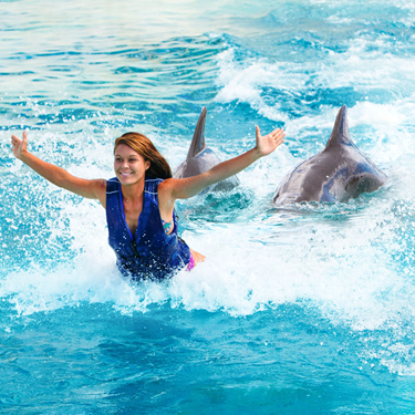 Kiss a dolphin, get pushed by the feet, go belly-to-belly, feed, learn and more!