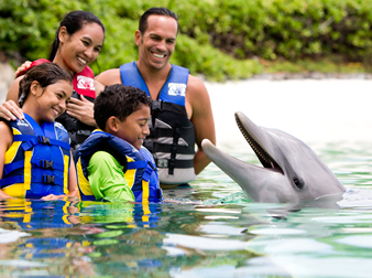 A family and young boy in water with dolphin