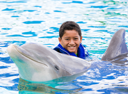A boy in the water with a dolphin