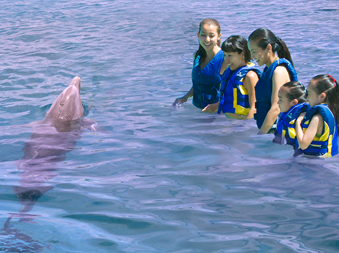 A family in the deep water swimming with a dolphin