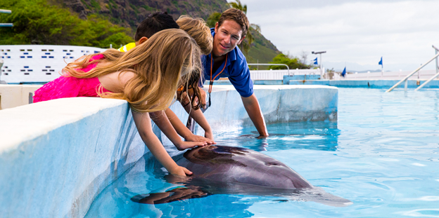 Kids reaching in and touching dolphin