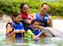A family in the water interacting with a dolphin as the boy gets a kiss on the cheek