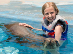 A young girl in the water cradling a sea lion