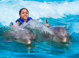 a young girl getting pulled by two dolphins from their dorsal fins