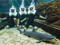 a group of three adults with snuba helmets right next to a whitetip reef shark