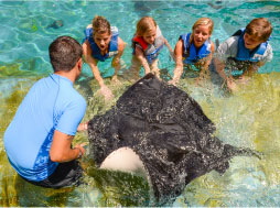 a family feeling the underside of a stingray