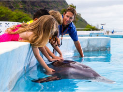 Kids reach in and pet a dolphin while staying dry