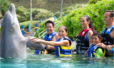 A family in the water shaking the fins of a dolphin