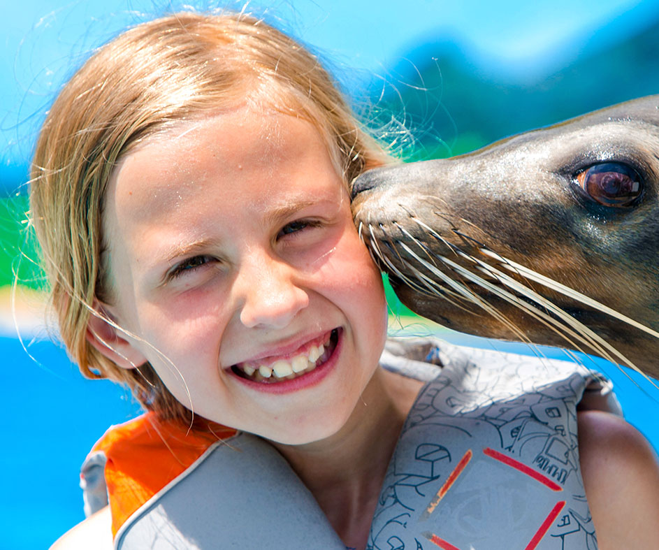 Young girl being kissed by seal