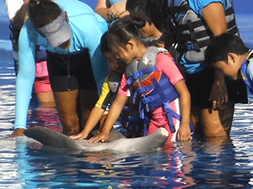 Girl and boy petting dolphin belly