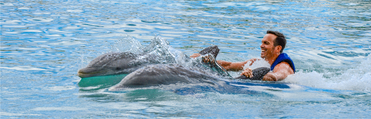 Dad getting pulled by two dolphins